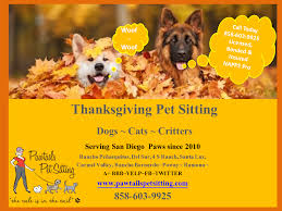 thanksgiving pet sitting in san diego are you ready for the