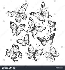 butterflies vector handdrawn illustration on white stock vector