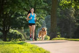 jogging with australian shepherd which dog breeds are best for an active lifestyle colliers news