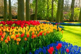 amsterdam tours flowerfields and keukenhof netherlands
