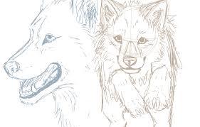 realistic wolf sketches by mirrorzan on deviantart