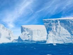 imagenes de la antartida descubren un ecosistema completo bajo el hielo de la antártida