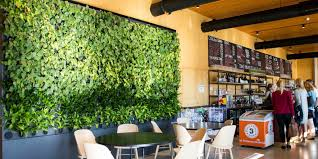 what are green walls the definition benefits design and greenery
