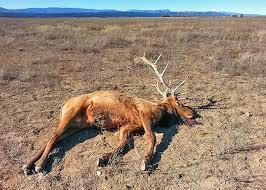 New Mexico wildlife images Two bull elk unlawfully killed on federal wildlife refuge new jpg