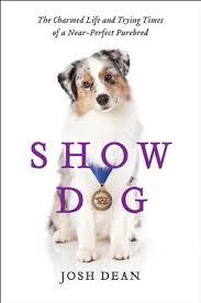 australian shepherd 2015 westminster 111 best dog shows images on pinterest westminster dog show