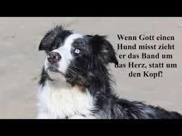 schöne hundesprüche 25 schöne hundesprüche zitate teil 3