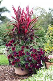 flowers for pots patio flowers full sun patio flowers patios