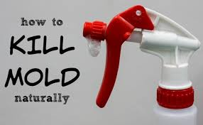 White Mold In Basement Dangerous by 3 Ways To Kill Mold Naturally Care2 Healthy Living