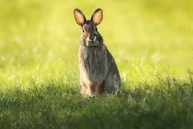 rabbit bunny how to keep your rabbit cool this summer