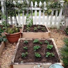 how to grow fruits and vegetables in your garden hgtv