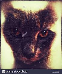 evil cat stock photo royalty free image 310571226 alamy
