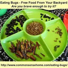 Cutter Bug Free Backyard Bug Free Backyard Outdoor Goods