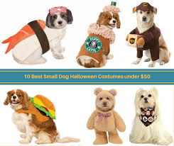 10 best small dog halloween costumes under 50