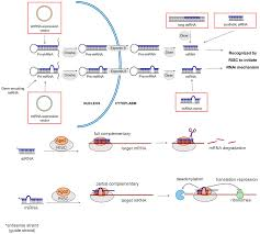 molecules free full text delivery of rnai therapeutics to the