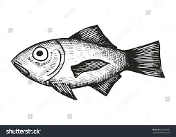 fish sea sketch stock vector 590364833 shutterstock