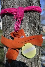 the amazing reason why you ll see scarves around trees this