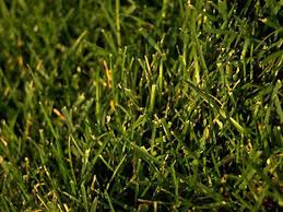 how to repair bald spots in your lawn hgtv
