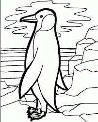 macaroni crested penguin coloring page printable pages click the