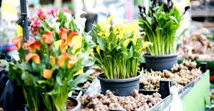 festival of flowers u0026 gardens garden show ireland garden show