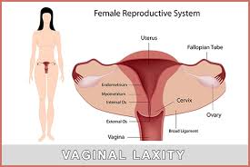 woman s virgina vagina vaginal laxity by dr elist health blog