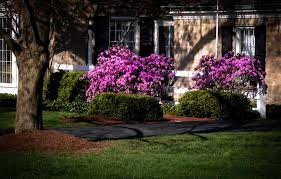 tree and shrub care emerald island lawn service knoxville tn