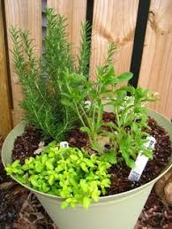 Easy Herbs To Grow Inside Best 25 Best Herbs To Grow Ideas On Pinterest Indoor Herbs