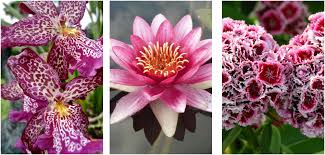 are these the worlds top 13 most beautiful flowers serenity