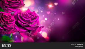 roses and hearts roses hearts background image photo bigstock