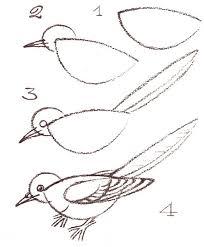 490 birdies images bird art animals drawings