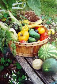 Gardening Basket Gift Ideas by Garden Harvest Basket Harvest Basket Garden Trug Youtube Large