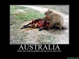 just a little daily dose of australian nope album on imgur