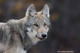 obama s poor conservation record defenders of wildlife