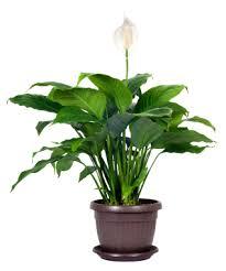 grower direct blog 5 deceptively dangerous house plants