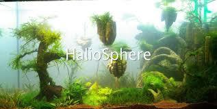 Aquascaping Techniques Haliosphere Blog Aquariophile Articles Sur La Technique D