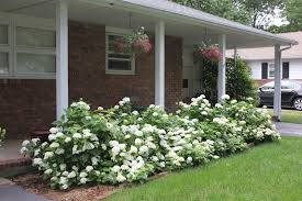 plants for the house small front yard landscaping house design