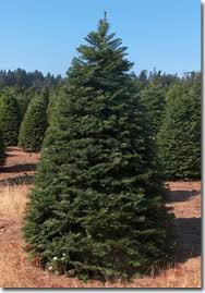 fundraiser selling christmas trees and pumpkins in phoenix az