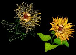 vector sunflower drawing background free vector download 129 836