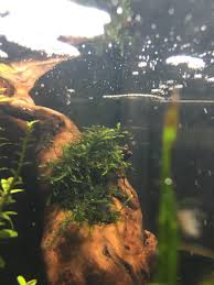 2 gallon nano shrimp tank the planted tank forum