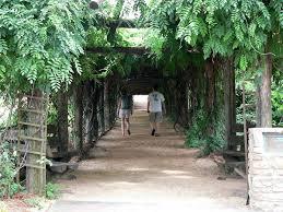 Botanical Gardens In Nc by Coker Arboretum Wikipedia