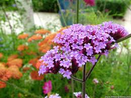 Lilac Flower by Desktop Wallpapers Flowers Backgrounds Lilac Flower Www