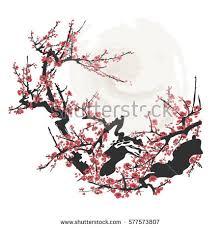 blossom japanese cherry tree stock vector