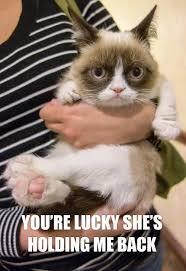 Tardar Sauce Meme - lemme at em funny things pinterest grumpy cat cat and meme