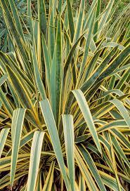 usda native plants 407 best perennials images on pinterest perennials french