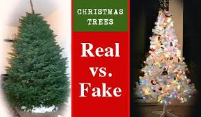 christmas tree prices real christmas tree real christmas tree prices chicago instat co