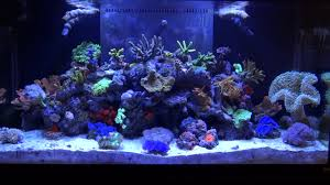 saltwater aquarium animals saltwater aquarium need very serious