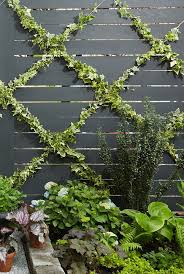 simple ivy strands clining to wall clipart clipground