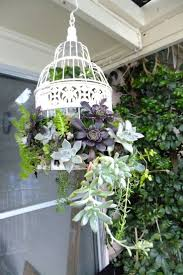 the 25 best birdcage planter ideas on pinterest succulent