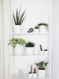 houseplants to fill your home with kate la vie