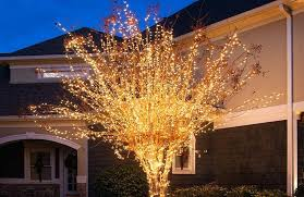 yard trees lighted tree home decor outdoor