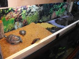 tortoise home decor purchasing turtle decorations for home the minimalist nyc